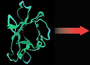 Correctly Folded Protein